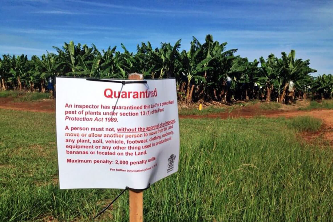 After an outbreak of Panama Tropical Race 4 in 2015, DES had to put biosecurity measures in place at certain banana plantations.