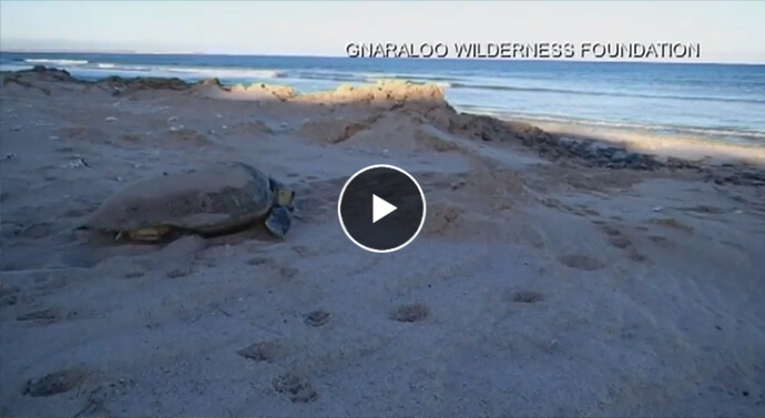 Gnaraloo wilderness foundation - play video